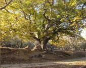 شناسایی دو باغ با درختان ۵۰۰ ساله در در بوانات فارس